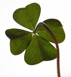 four-leaf-clover.jpeg