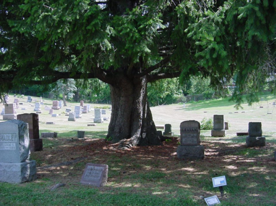 tree_grave.png